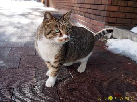 馬車道通りの 外猫さん