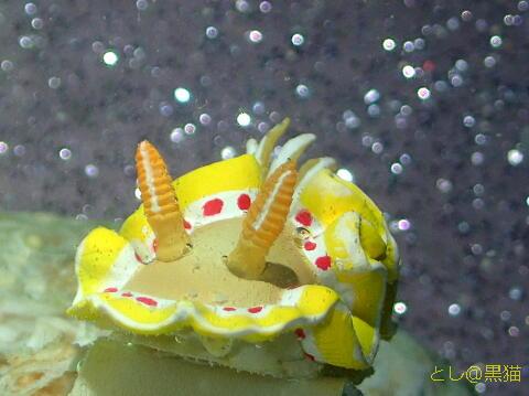 ウミウシ模型 キラメル