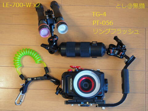 TG-4ウミウシカメラ  6月19日 大瀬崎のウミウシ その1